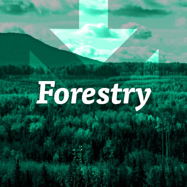 MoE-Industries-Forestry